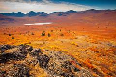 alpine tundra - stock photo