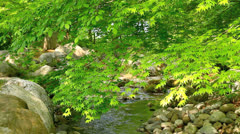 Green leaves  and a creek in spring.+sound Stock Footage