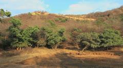 India Ranthambhore National Park view Stock Footage