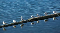River gulls Stock Footage