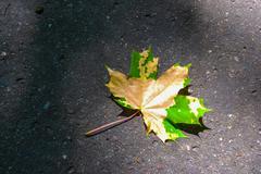 Autumn maple leaf on pavement Stock Photos