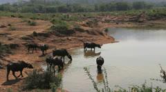 India  village buffalo at waterhole   Stock Footage