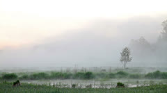 Mist over water Stock Footage