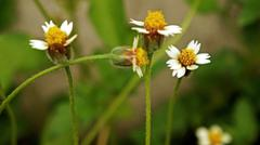 small little flowers - stock photo
