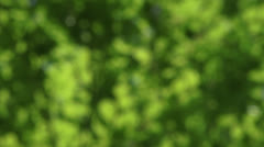 Green leaves of Beech (Fagus sylvatica) - out focus, full screen Stock Footage