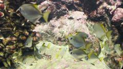 Fish in the environment Stock Footage