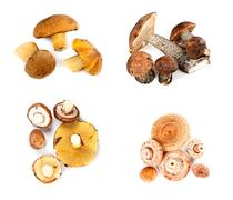 different fungi decomposed into four piles - stock photo