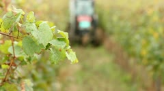 Harvesting wine grapes Stock Footage