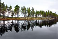 Scandinavian lake with conifers Stock Photos