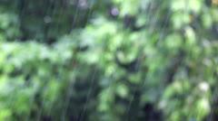 Rain falling on green foliage Stock Footage