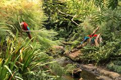 Parrots in the forest. Stock Photos