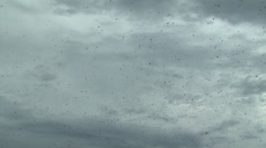 A large flock of birds flying in the sky Stock Footage