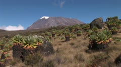Kilimanjaro Stock Footage