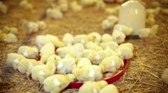 Chicken farm Stock Footage