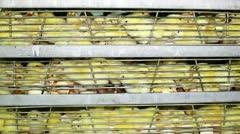 Incubator, chicken farm Stock Footage