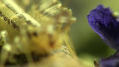 Myriapoda macro Stock Footage