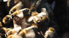 Bees ventilate Stock Footage