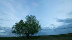 Alone tree in field Stock Footage