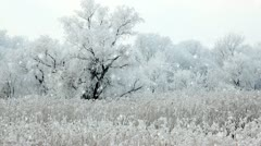 Winter - stock footage