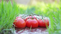 Tomatoes on a vine lying between grasses in a stream - stock footage