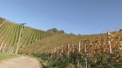 A vineyard near Stetten, Wurttemberg, Germany - stock footage