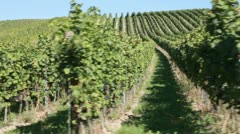 A vineyard in Deutschkreutz, Austria Stock Footage