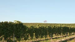 A vineyard in Deutschkreutz, Austria - stock footage