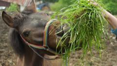 Horse eats from hand. Stock Footage