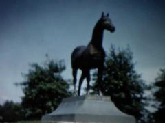 Horse walking and Horse statue Stock Footage