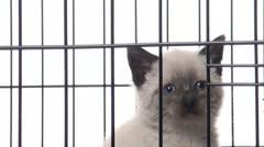 Cute kitten cage Stock Footage