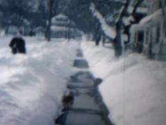 Cat walking in snow Stock Footage