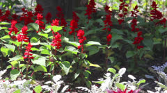 Group of red flowers on light breeze - stock footage