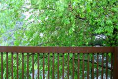 Wood railing with mulberry tree - stock photo