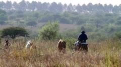 Gauchos riding horses Stock Footage