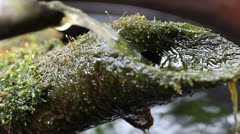 Water in mossy fountain Stock Footage