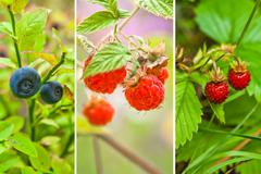 any wild berry from forest - stock photo