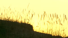 Grass on sand dunes. sunrise Stock Footage