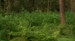 Forest on the swamp Stock Footage