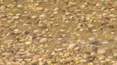 Seabed littered with shells Stock Footage