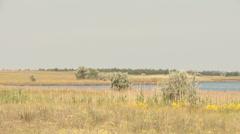 Meadow in the coastal strip Stock Footage