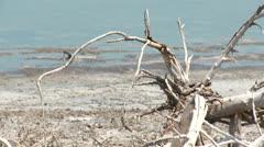 Dead tree on the coast Stock Footage