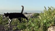 Black and white cat comes up Stock Footage