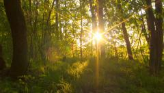 Forest at sunset. Timelapse. Stock Footage