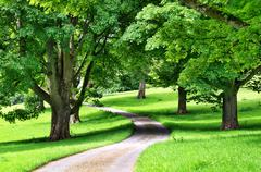 Avenue of trees with a road winding through Stock Photos