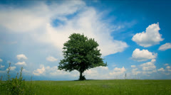 lonely tree ,sky and clouds timelapse - stock footage