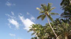 Top of palms on blue sky background Stock Footage