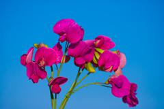 Red field flowers (astragalus) against blue sky Stock Photos