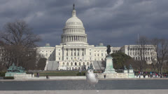 Seagull on lake in front of The United States Capitol building by day,Washington Stock Footage