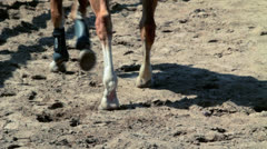 Legs and hooves of horses Stock Footage