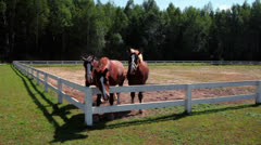 Three horses at horse farm. Group of horses behind fence at ranch Stock Footage